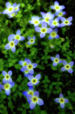 Tiny Bluet Photograph - Bluets by Tony Gayhart