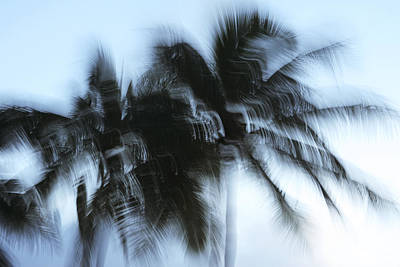 Blurred Palm Trees Art Print by Vince Cavataio - Printscapes