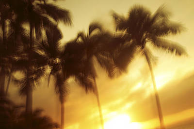 Blurred Palms At Sunset Art Print by Vince Cavataio - Printscapes