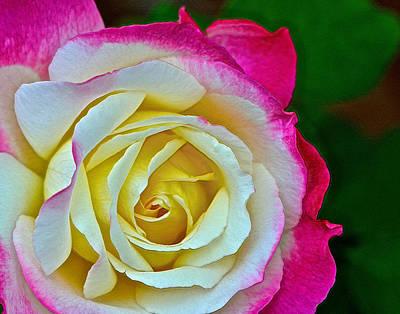 Blushing Rose Art Print by Bill Owen