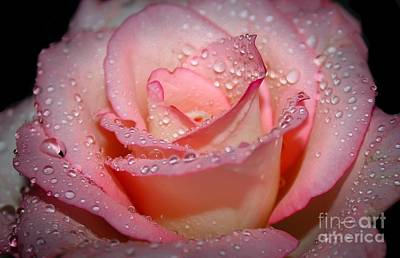 Blushing Rose Print by Tracy  Hall