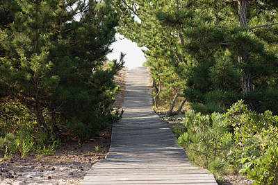Boardwalk Footpath To The Beach. Print by Schedivy Pictures Inc.