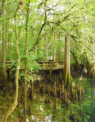 Photograph - Boardwalk Manatee Springs by Sheri McLeroy