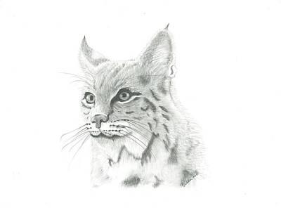 Bobcat Drawing Drawing - Bob Cat 1 by EJ John Baldwin