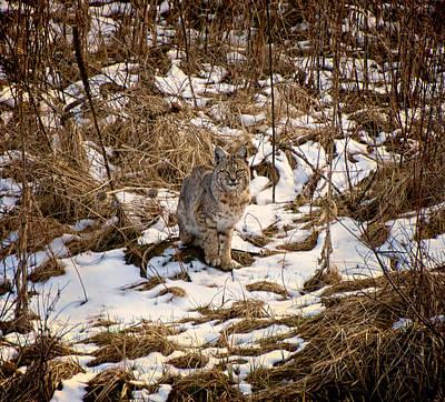 Photograph - Bob The Cat by Britt Runyon