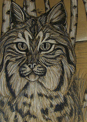 Bobcats Mixed Media - Bobcat And Birch 2  by Olivia Hoppe