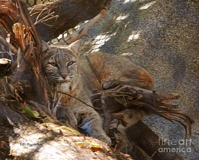 Bobcat Print by DiDi Higginbotham
