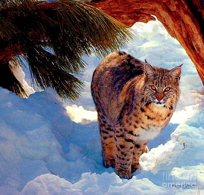 Photograph - Bobcat I by Christine S Zipps