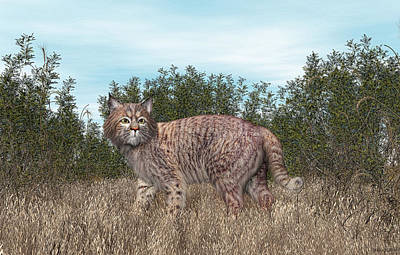 Digital Art - Bobcat by Walter Colvin