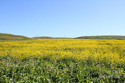 Horror Movies Photograph - Bodega Bay . Yellow Field . 7d12403 by Wingsdomain Art and Photography