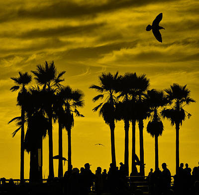 Venice Beach Palms Photograph - Boiling Over Bubbling Up by Russell Styles