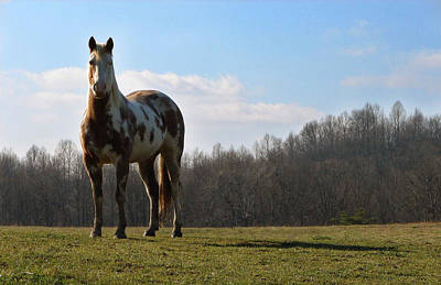 Chestnut Dun Horse Photograph - Bold And Beautiful by Brian Stevens