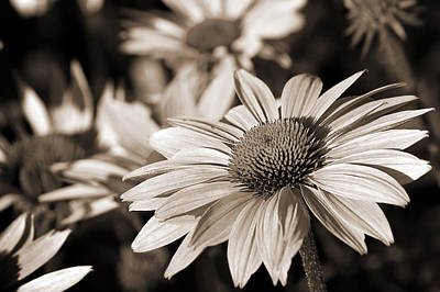 Photograph - Bold And Beautiful In Monochrome by Bill Pevlor
