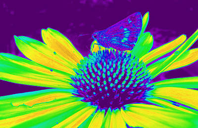 Computer Generated Flower Photograph - Boldness In Nature by Kim Galluzzo Wozniak