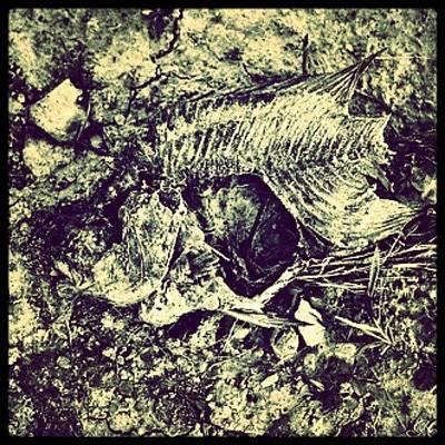 Bone Dry #huntingburg #bones #fish #art Art Print