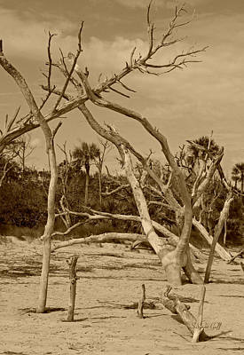 Photograph - Boneyard In Sepia by Suzanne Gaff