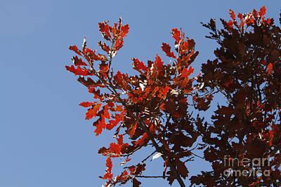 Photograph - Bonito Red by Shawn Naranjo