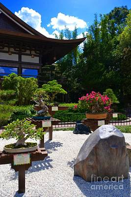 Photograph - Bonsai Garden by Bonnie Myszka