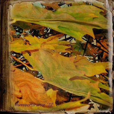 Apple Wall Art - Photograph - Book Of Leaves  by Anna Porter