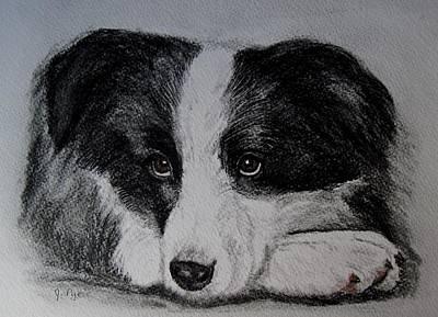 Borden Collie Pup Art Print by Joan Pye