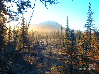 Photograph - Boreal Forest Sunrise by Adam Owen