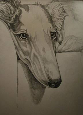 Wolfhound Drawing - Borzoi by Deborah Fruehling