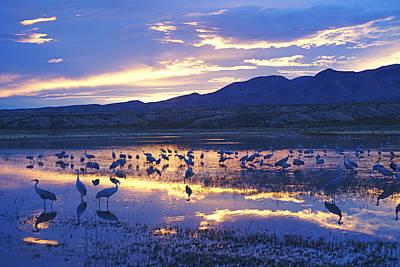 Photograph - bosque sunset I by Diana Douglass