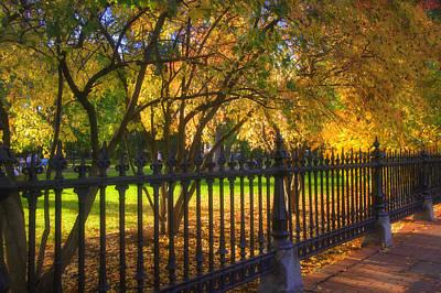 Photograph - Boston Foliage by Joann Vitali