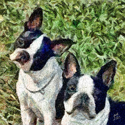 Boston Terrier Duo - Skipper And Dee Dee Art Print by Patty Dunlap and Laurence Canter