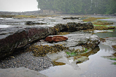 Photograph - Botanical Beach Tidal Pool by Marilyn Wilson