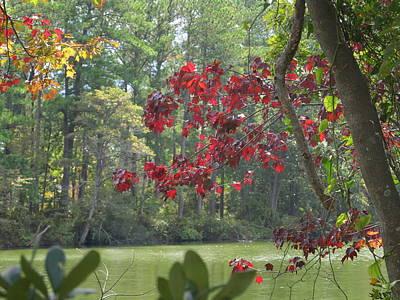 Botanical Garden Waterway Art Print