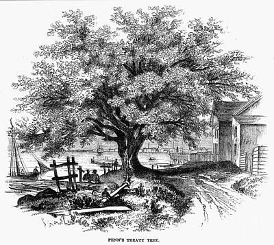 William Penn Treaty Elm Photograph - Botany: Penn Treaty Tree by Granger