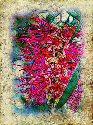 Photograph - Bottlebrush by Judi Bagwell