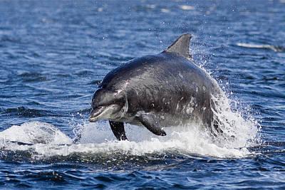 Y120831 Photograph - Bottlenose Dolphin Breach by Catherine Clark/www.cjdolfinphotography.co.uk