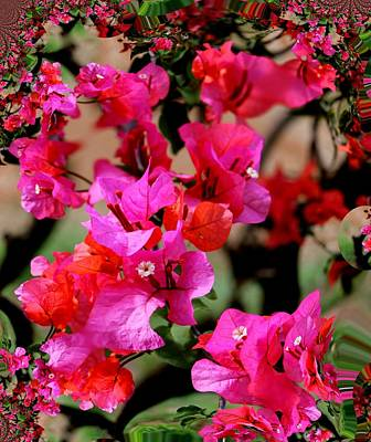 Photograph - Bougainvillea 'alabama Sunset 3 by Elizabeth  Doran