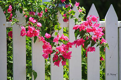 Photograph - Bougainvillea On A White Fence by Roena King