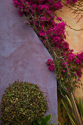 Photograph - Bougainvillea by Roger Mullenhour