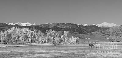 Photograph - Boulder County Colorado Front Range Panorama With Horses Bw by James BO Insogna