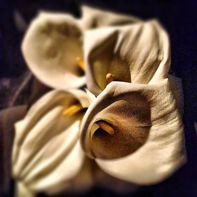 Bouquet Photograph - Bouquet by Jane Bulatnikova