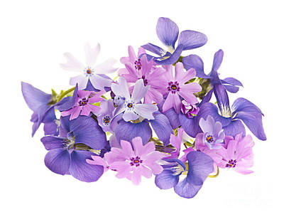 Arranges Photograph - Bouquet Of Spring Flowers by Elena Elisseeva