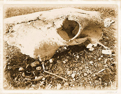 Photograph - Bovine Skull by Tammy Herrin