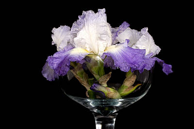 Bowl Of Iris Art Print by Trudy Wilkerson