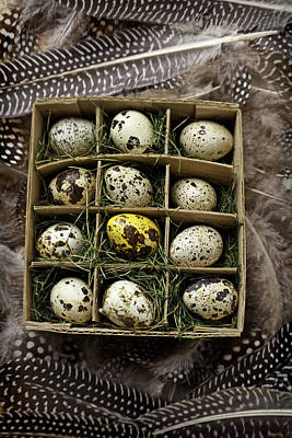 Box Of Quail Eggs Art Print by Garry Gay