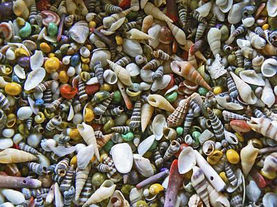 Box Of Sea Shells Art Print by Pamela Patch