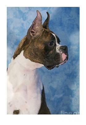 Boxer 469 Art Print by Larry Matthews