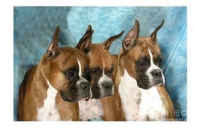 Boxer 655 Art Print by Larry Matthews
