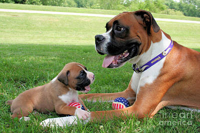 Boxer Mommy And Pup Art Print by Renae Laughner