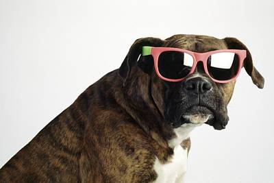 Boxer Wearing Sunglasses Art Print by Ron Nickel