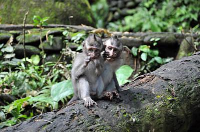 Photograph - Boxing Monkey by Kamel Rekouane