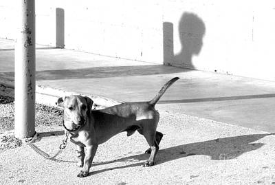 Profile Shadow Photograph - Boy Meets Dog by Joe Jake Pratt